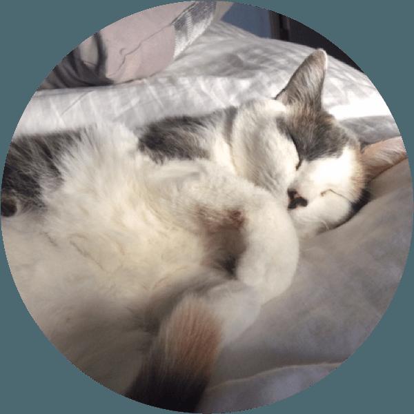 Cat Adoption Twin Cities