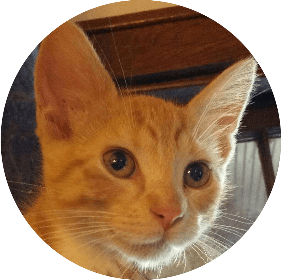 Happy Tail Arthur