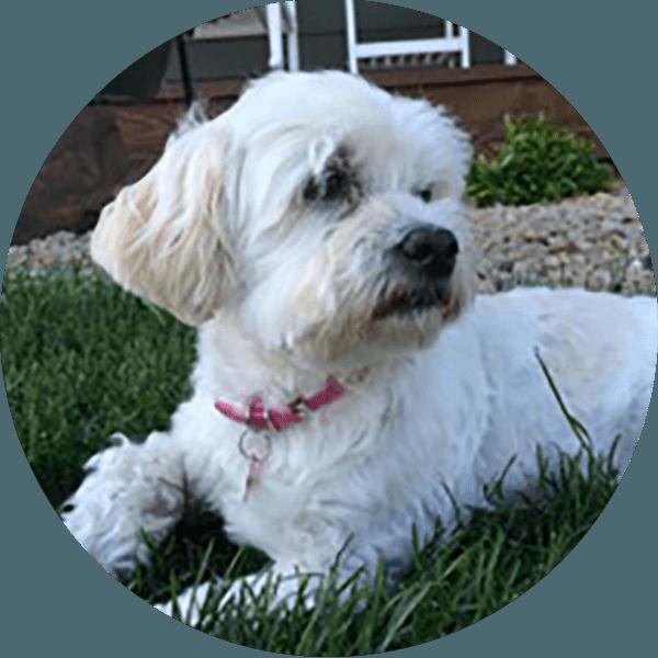 Lila in grass
