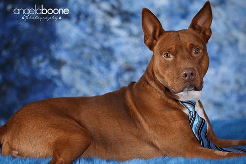 Spotlight Pet of the Week – Red!