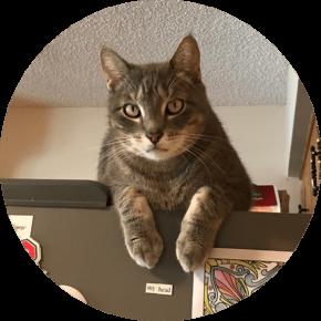 Jax – Happy Tails Tuesday