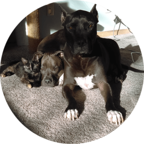 Tortuga – Happy Tails Tuesday