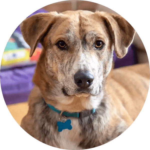 Twin Cities Small Dog Rescue