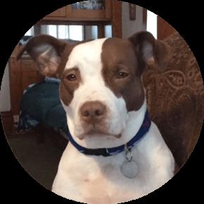 Mazie – Happy Tails Tuesday