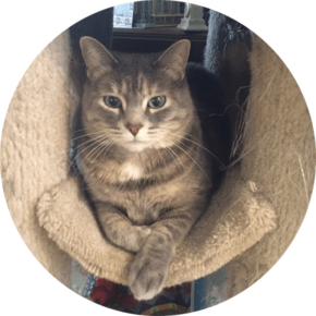 Birdie – Happy Tails Tuesday