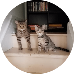 O'Malley and Kiddie – Happy Tails Tuesday
