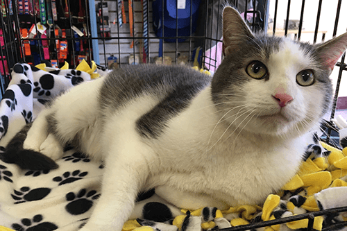 Spotlight Pet of the Week – Levi!