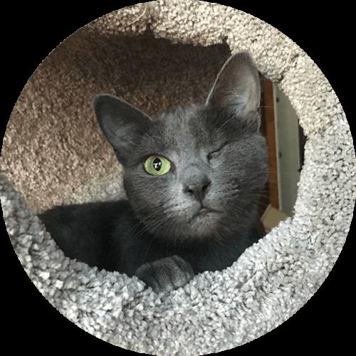 Lenny – Happy Tails Tuesday