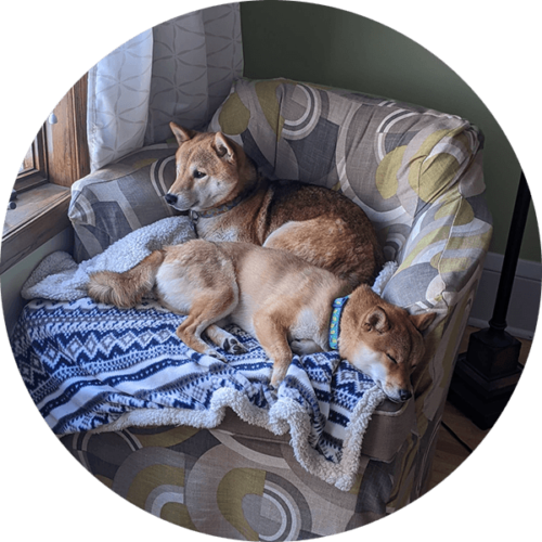 Peach – Happy Tails Tuesday